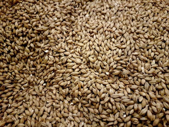Malted Barley Malt Barley Whiskey Whisky Grain Drybarley Macro Photography Macro Cereal Ceral Grain Barley Corns Backgrounds Full Frame Textured  Pattern Agriculture Close-up Heap Cereal Plant Focus