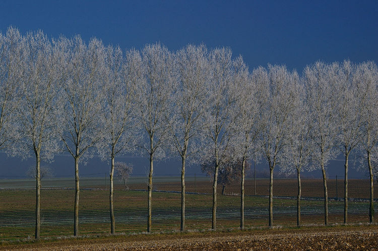 Wintertime Agriculture Clear Sky Field Frosted Trees Landscape No People Outdoors Tranquil Scene Tree