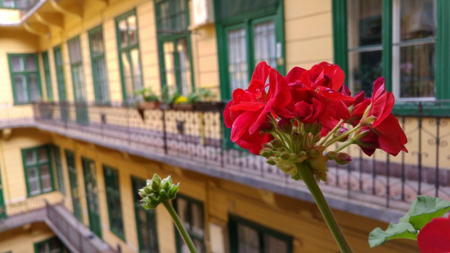 Home Is Where The Art IsFlower Flowers Balkony Pure Pure Beauty Pure Photography Summer And Flowers Pure And Untouched (raw Image) Untouched Untouched Photo Flowerporn Geranium LG G4 No People LG Photography Buildings Architecture Lg Lens Foreground Flowers Foregroundfocus