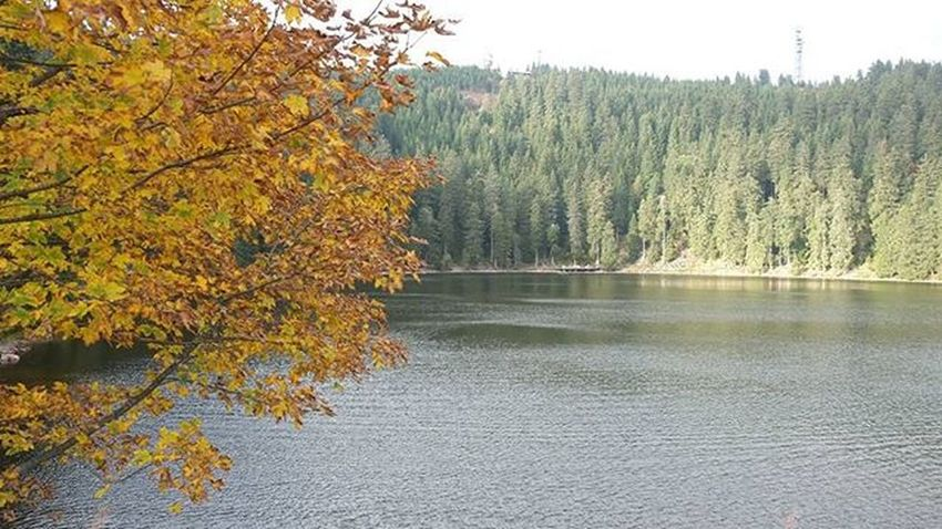 Schwarzwald am Mummelsee 😊 Schwarzwald Blackforest Landscape Germany Igers Ig_germany Photooftheday Remember Throwback Deutschland Saturday Monday Autumn Herbst Cold Lake See Forest Pictureoftheday POTD Kölnerauftour Unterwegs Snapshot