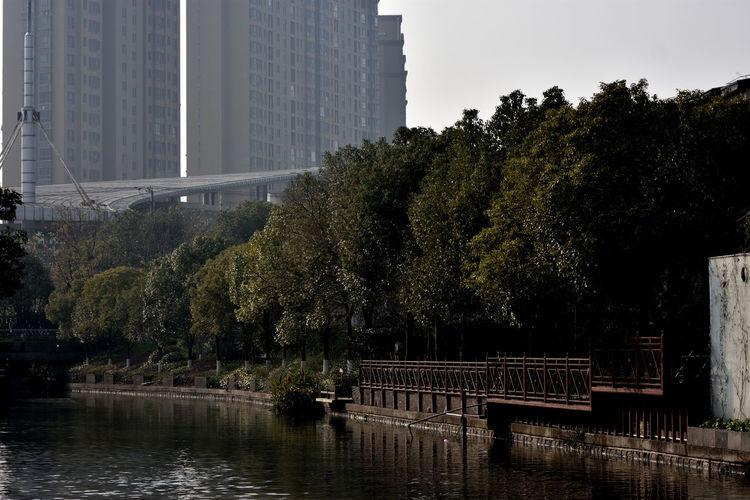 Trees by lake against buildings in city