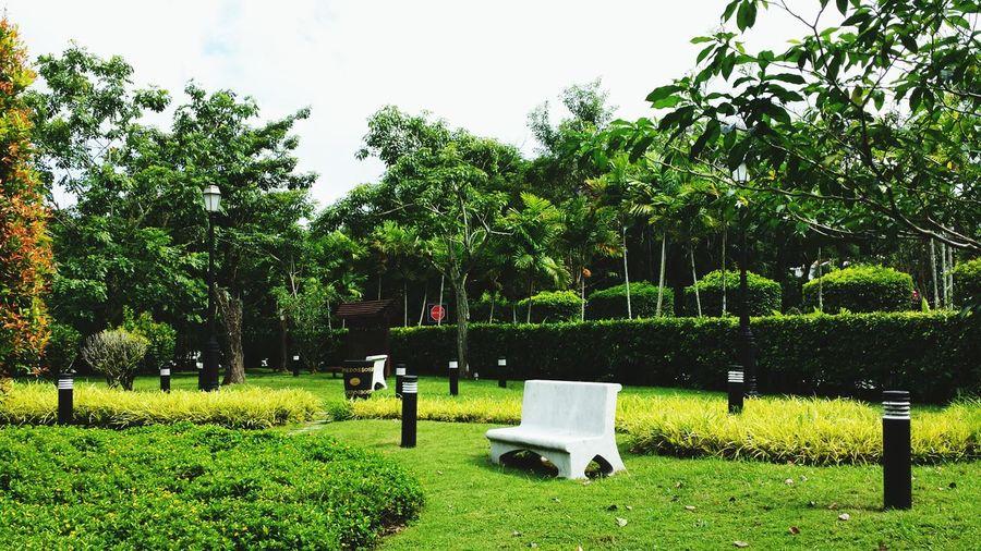 Dream garden. Garden Of Eden Peace And Tranquility