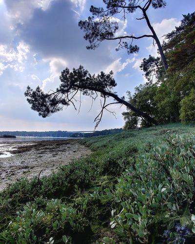 Anse de Penfoul France Bretagne Tree Bird Water Sea Sky Grass Horizon Over Water Animal Themes Landscape Green Color Tranquil Scene Idyllic