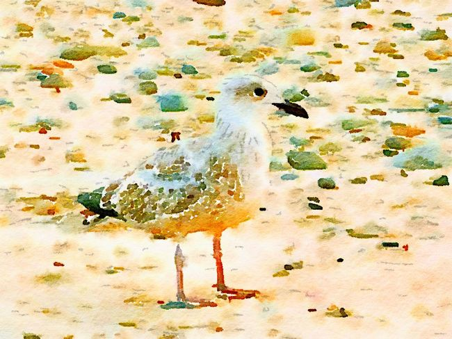 Seagull Beach Sand Watercolour Waterlogue Art Photography