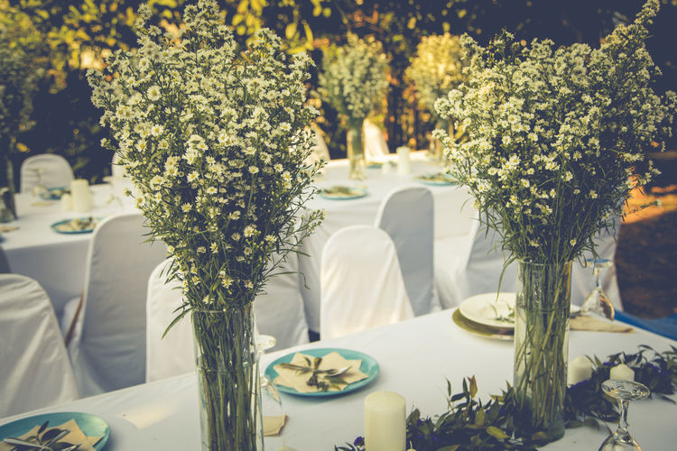 View of potted white flower on table