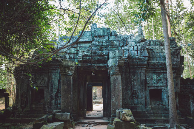 Siem Reap Cambodia Angkor Built Structure Tree Architecture History Place Of Worship Plant The Past Ancient Religion Belief Spirituality Building Day Old Old Ruin Ancient Civilization No People Abandoned Archaeology Outdoors Ruined Deterioration Architectural Column