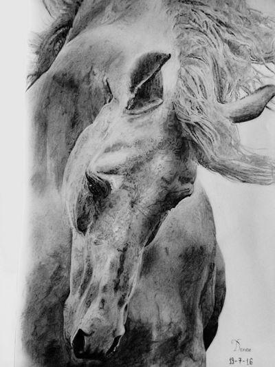 Sketch Drawing Horse Drawing Sketchbook ArtWork Art Art, Drawing, Creativity Art Gallery Artist Sketching