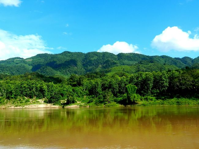Thinking About Life Mekong ASIA Bagpacking Trip Scenics Laos LAO Forest Tranquil Scene Beauty In Nature Wilderness Rainforest Nature Water Landscape River Tranquility Outdoors