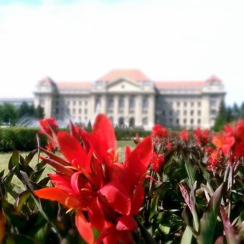Nurzubesuch Focus Debrecen Hungary University Mainbuilding Fountain Summertime Freedom Flowers Biketour