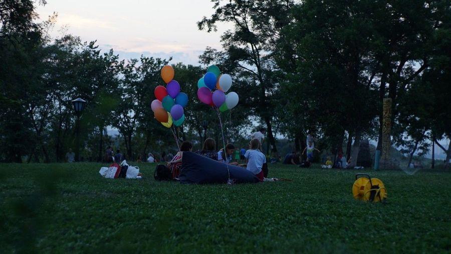 Tree Balloon Grass Celebration Birthday Park - Man Made Space Outdoors Helium Balloon People Day Nature Sky Mammal Kiev Ukraine CarlZeissPlanar Planar 80/1.5 Sonya7II