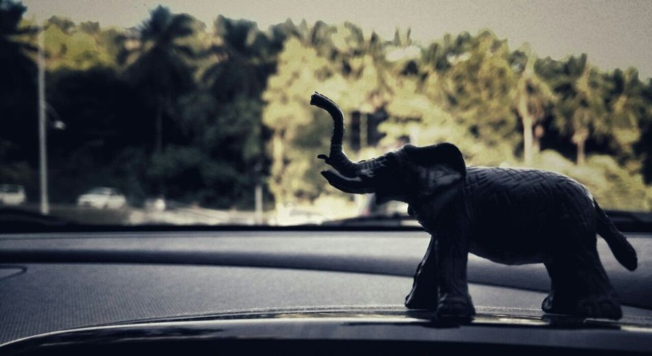 Car One Animal Animals In The Wild No People Day Animal Themes Mammal Outdoors Miniature Elephant Elephant Gajah Sillouette