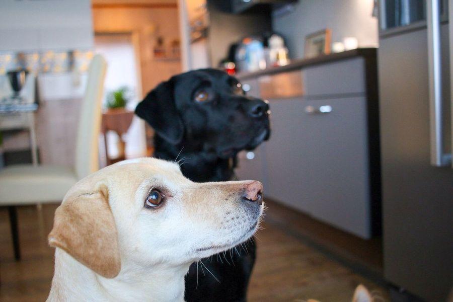 Dogsofeyeem Dogs December 2015