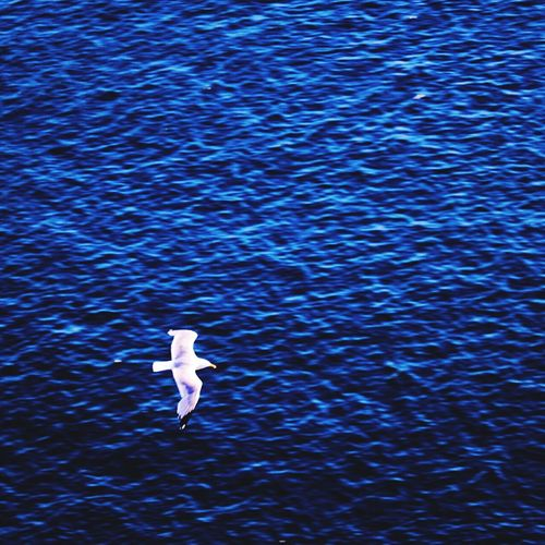 Sea Nature Birds Nature Photography Taking Photos Ocean