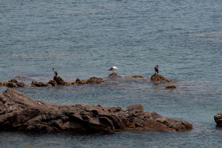 Animal Themes Animals In The Wild Balance Beach Beak Bird Coast Coastline Corsica Day Escapism Getting Away From It All Horizon Over Water Nature One Animal Outdoors Rippled Rock Sea Vacations Water Weekend Activities Wildlife Animal Wildlife No People Large Group Of Animals Togetherness Beauty In Nature Pelican Cormorant