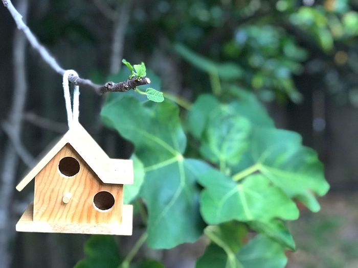 Birdhouse Plant Part Leaf Focus On Foreground Plant No People Nature Close-up Green Color Creativity Art And Craft Wood - Material Outdoors Tree Day Growth Hanging