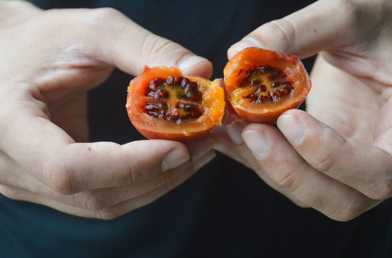 Tamarillo or tree tomato, one of the exotic fruits abundant in North Sumatra Tamarillo Tree Tomato Exotic Fruit Foodie Summer Food Food Photography Exotism Travel Photography Food And Travel Human Hand Fruit Holding Close-up Food And Drink Halved Citrus Fruit Sour Taste
