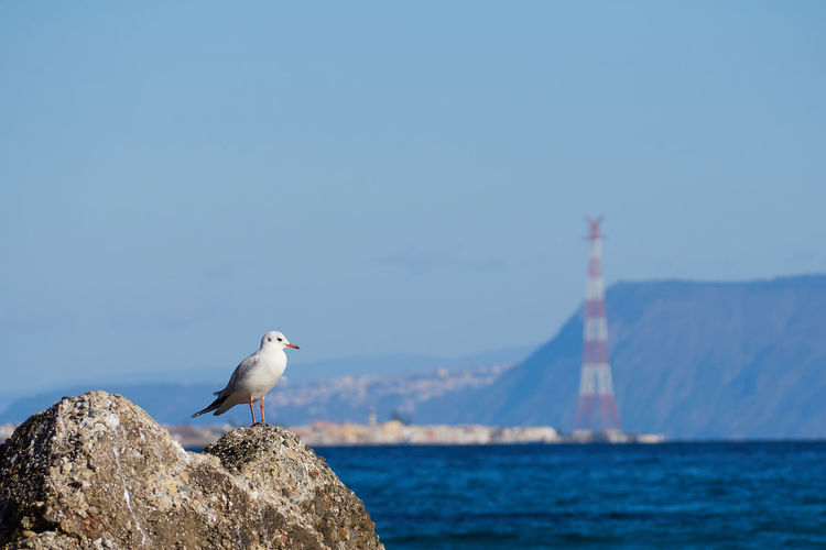 Sea of Messina with a seagull on a rock and the pylon in the background Mediterranean  Sicily Animal Themes Animal Wildlife Animals In The Wild Beauty In Nature Bird Day Italy Messina Nature No People One Animal Outdoors Perching Sea Seagull Sky Water
