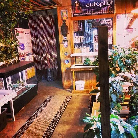 The display area is unintentionally turning Hawaiian. I'm cool with it. Surelygrow Hydroponics Hydroculture Horticulture plants gardening instagarden instagrow organic hawaiian