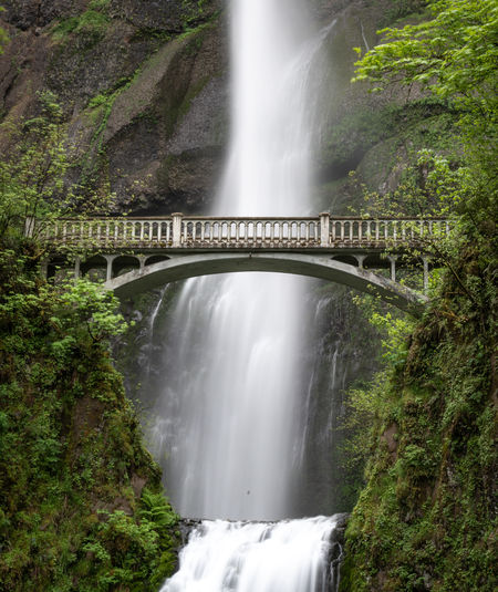Water fall - Multnomah Falls in Spring Morning Multnomah Multnomah Falls  Nature Portland, OR Tree Water Falls Bridge Cascade Day Early Morning Environment Fall Falls Long Exposure Nature No People Outdoors Overcast Plant Rain Forest River Springtime Water Waterfall