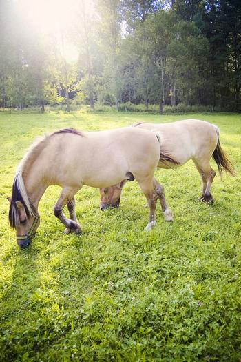 Animal Themes Beautiful Horses Domestic Animals Grass Grazing Horses Horse Horses Mammal Outdoors Sunshine And Horses