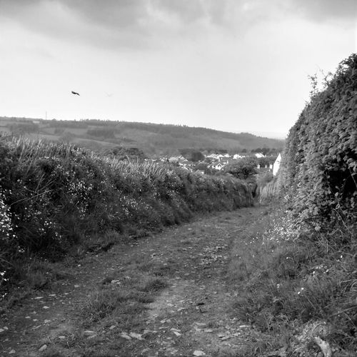 Bird Black And White Blackandwhite Cloudy Country Lane Dartmoor Ghost Hill Landscape Lane Moorland Nature Outdoors