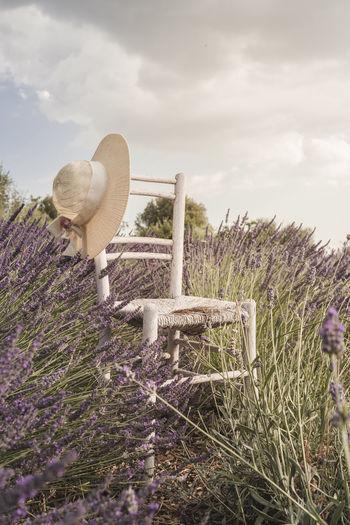 Rear view of woman by purple flowering plants on field against sky