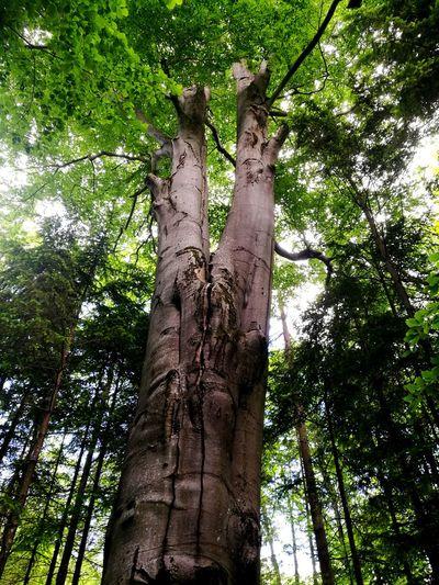 Vegetation Tree