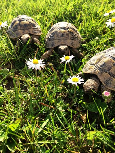 not your typical aww 🐢💕 Baby Turtles Turtles Flowers Cute Pets I ♥ Turtles
