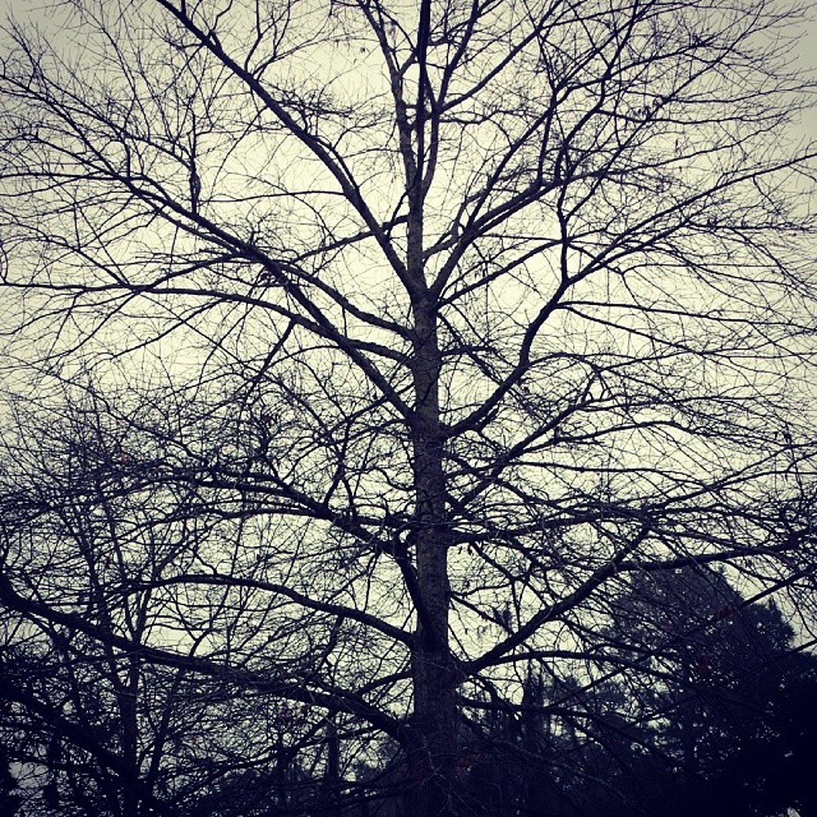 bare tree, branch, tree, low angle view, silhouette, sky, tranquility, nature, beauty in nature, tree trunk, scenics, tranquil scene, outdoors, no people, dusk, growth, day, sunset, backgrounds, clear sky