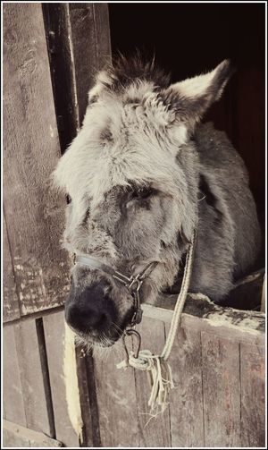 Animal Head  Animal Themes Close-up Day Domestic Animals Horse Mammal No People One Animal Outdoors