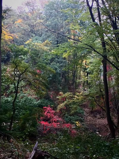 Hiking Forest Photography Plant Tree Growth Beauty In Nature No People Nature Green Color Day Outdoors Scenics - Nature Forest