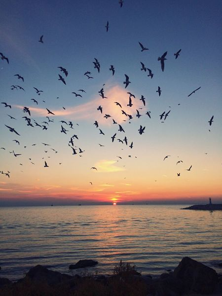 Freebird Sunset Sea Sky Nature Beauty