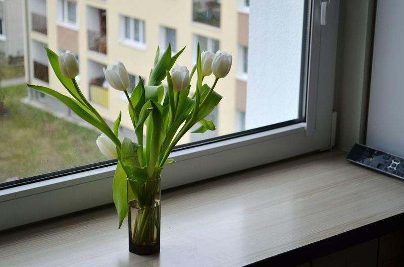 Vase Flower Window Sill Window Home Interior Indoors  Tulip No People Plant Architecture Flower Arrangement Domestic Room Freshness Day Nature Home Showcase Interior Poland Dzień Kobiet 💐 Dzień Kobiet