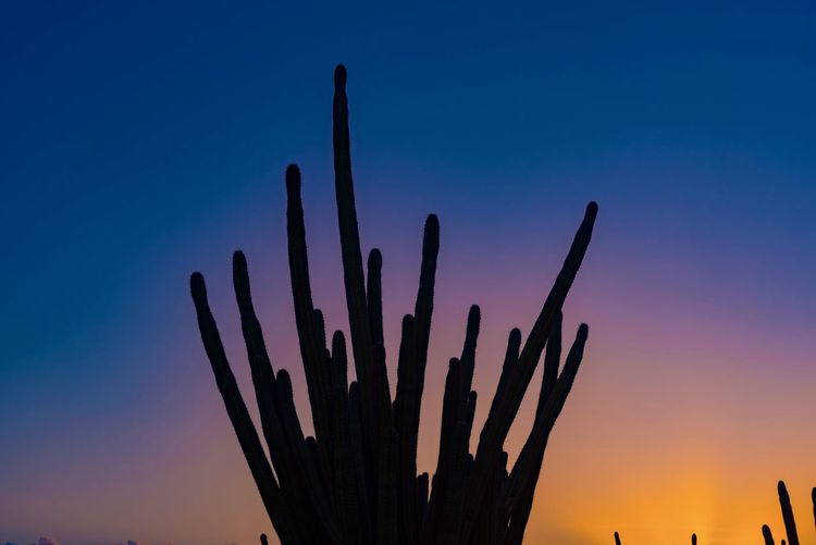 Beauty In Nature Cactus Caribbean Close-up Growth Nature No People Outdoors Saguaro Cactus Sky Sunset