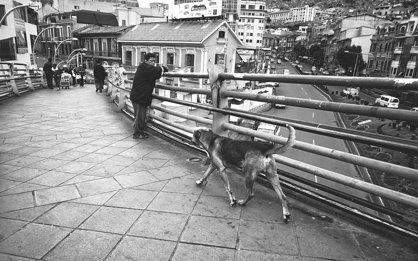 Man and dog in city