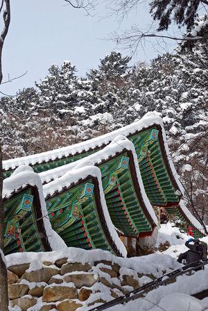 Buddist Temple Winter Buddhist Temple Snow Tree Snow ❄ Snowlandscape Snowwhite In Korea