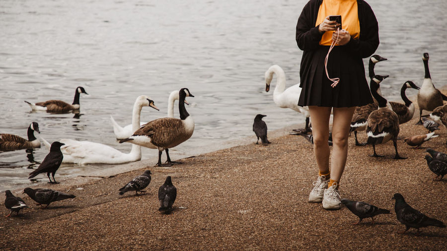Flock of birds and a girl by a lake