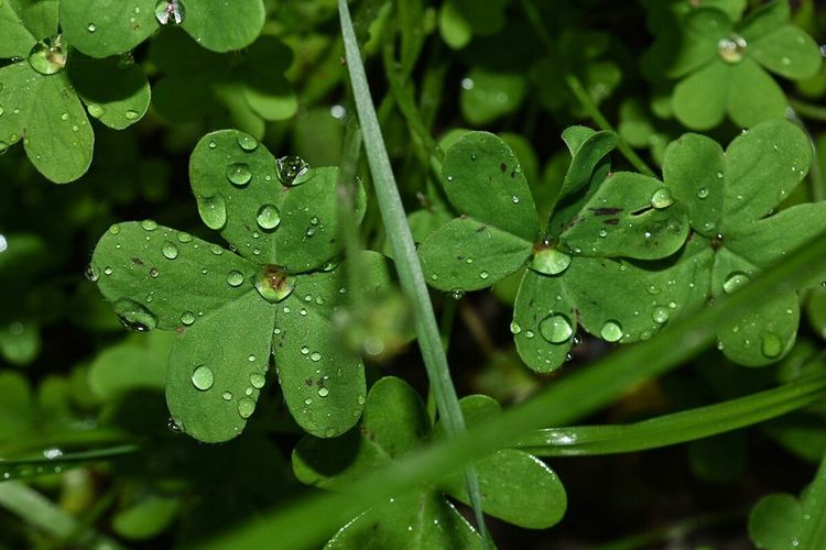 Drop Nature Green Color Water Growth Plant Beauty In Nature Close-up No People Rain RainDrop Leaf Wet Dew Freshness Outdoors Day Fragility