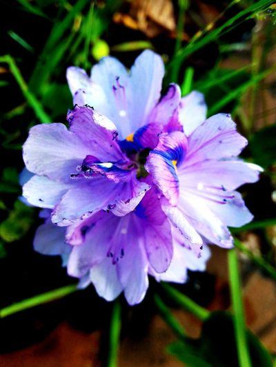 U4 U4 Filter Purple Flower Puple Flor Nature Plant Day Fragility Purple Beautiful Flower