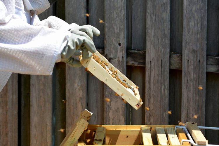 Beekeepers inspecting a young hive pulling out frames and foundations.