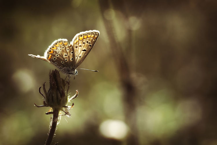 Animal Themes Animals In The Wild Beauty In Nature Butterfly - Insect Close-up Day Flower Flower Head Focus On Foreground Fragility Freshness Growth Insect Nature No People One Animal Outdoors Plant macro