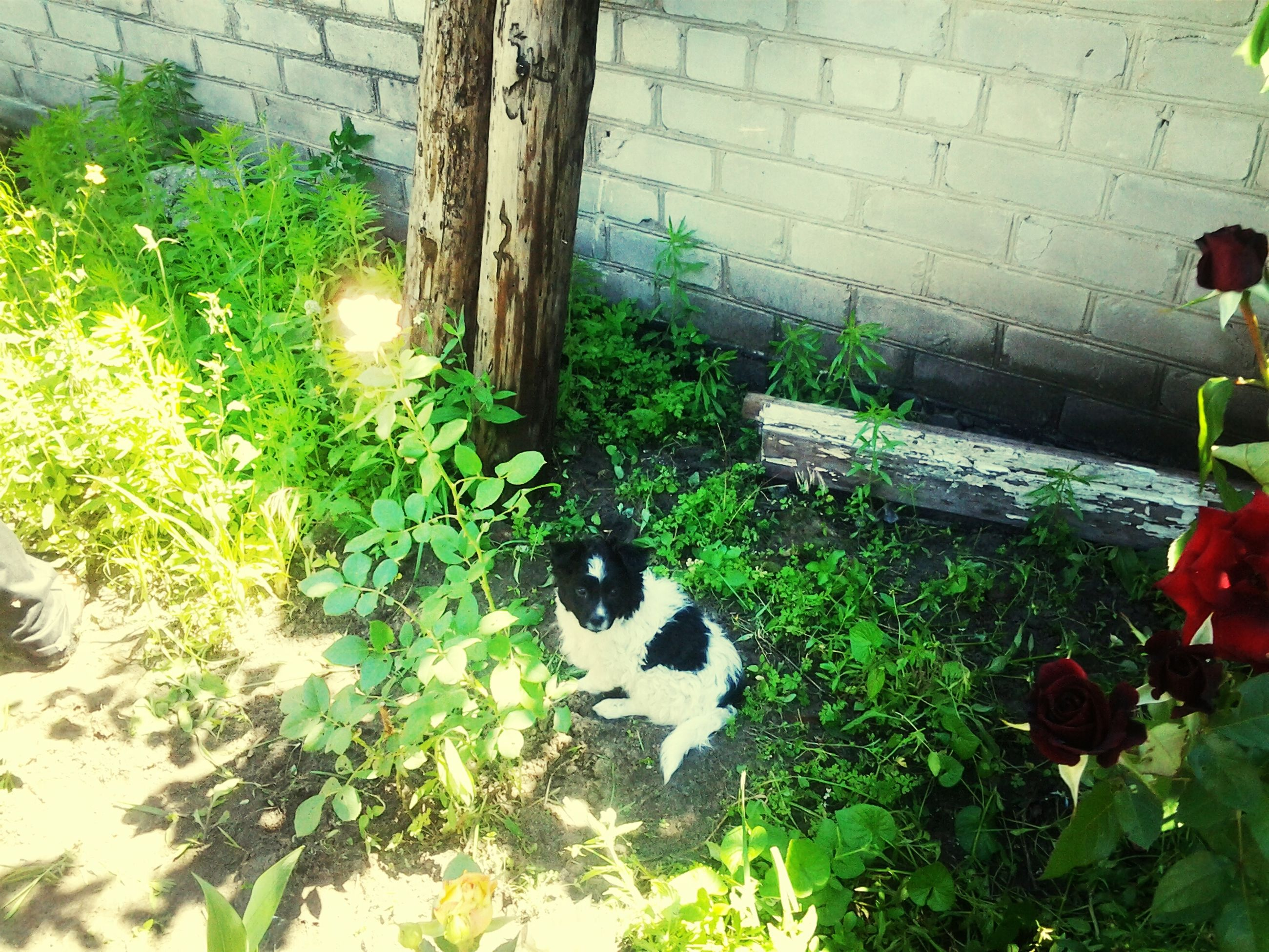 pets, plant, domestic animals, grass, green color, animal themes, one animal, leaf, front or back yard, dog, domestic cat, growth, cat, lawn, mammal, outdoors, high angle view, day, potted plant, sunlight