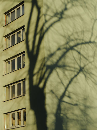 Close-up of bare tree against building