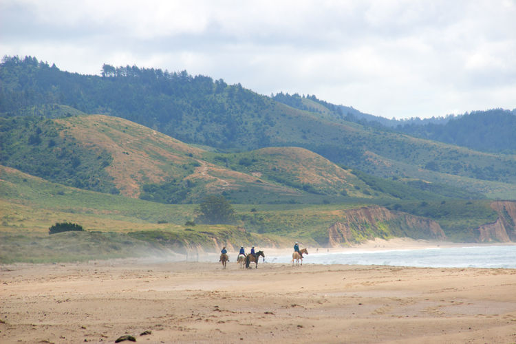 Activity Animal Coast Coastline Horseriding Horses Idyllic Landscape Leisure Activity Lifestyles Mountain View Nature Outdoors Pacific Ocean Physical Geography Point Reyes National Seashore Riding Scenics Sport Tranquil Scene Trees Weather