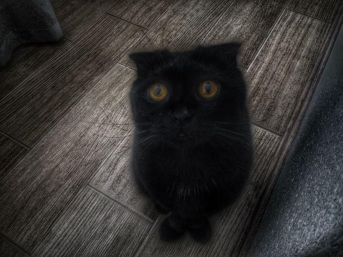Brown Eyes Big Brown Eyes Black Cat EyeEm First Eyeem Photo EyeEm Best Edits EyeEmBestPics Black & White My Black Cat Black Cats Brown Eyes <3