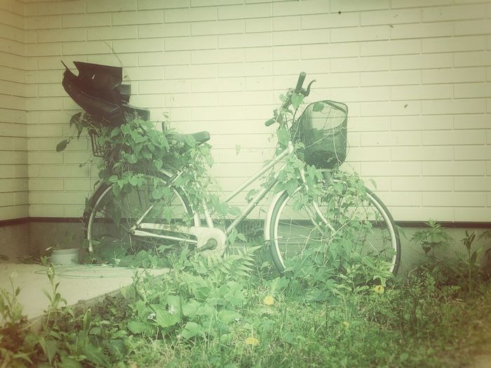 Out Of Order Plants Bicycle Vintage Oldschool Backyard Bicycle Vs Plant Eating No People