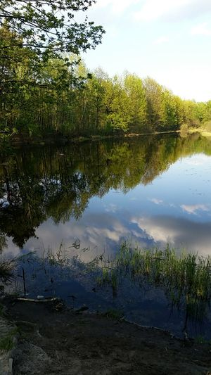 Reflection Water Lake Landscape Beauty In Nature Nature Sky No People Outdoors Tree Reptile Scenics Day Memories