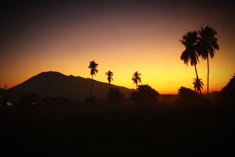 Another opportunity to be happy 😊 Silhouette Tree Sky Sunset Palm Tree Plant Beauty In Nature Scenics - Nature Tranquil Scene