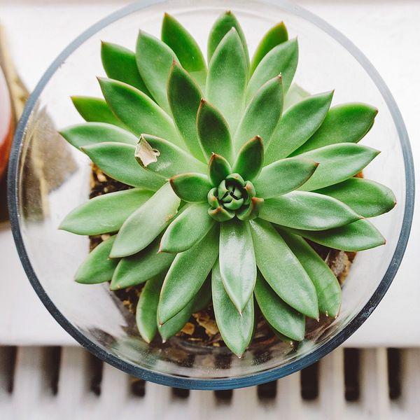Wabi-sabi Succulents