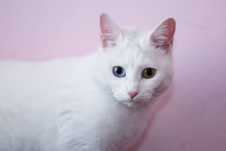 a cat with